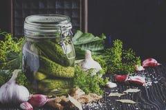 自创用卤汁泡的或酱瓜用莳萝、大蒜和sp 免版税图库摄影