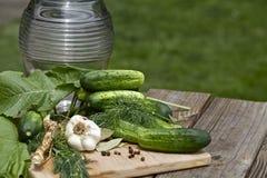 自创腌制的黄瓜 免版税库存图片