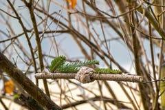 自创鸟饲养者,与坚果,葡萄干wrappi的椰子肥胖曲奇饼 免版税库存照片