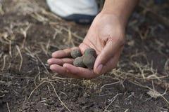 自创Seedballs种植园 库存照片