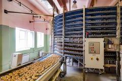 自动化围绕在面包店食物工厂、曲奇饼和蛋糕生产线的传动机机器 库存图片