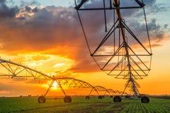 自动化种田在日落的灌溉系统 免版税库存照片