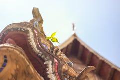 自发印度榕树幼木在寺庙的雕塑增长 免版税库存照片