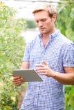 自温室检查西红柿的农夫使用数字式片剂 图库摄影