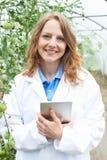 自温室研究西红柿收获的女性科学家 图库摄影
