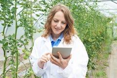 自温室研究西红柿收获的女性科学家 免版税库存照片