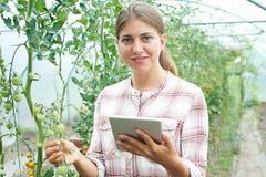 自温室研究西红柿收获的女性科学家 免版税图库摄影