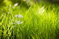 自然。背景。与肥皂泡的草。 库存照片
