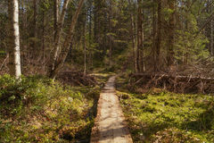自然与小径的背景视图 库存照片