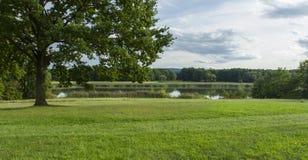 自然与树草甸和池塘的风景视域 免版税库存照片