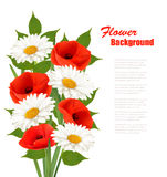 自然与红色鸦片和戴西的花背景 库存照片