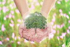 自然世界在大家的手上 免版税库存照片