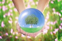 自然世界在大家的手上 免版税库存图片