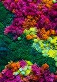 自然五颜六色的背景 免版税库存图片