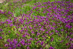 自然五颜六色的自然被弄脏的背景 Bokeh, Boke狂放的Flo 免版税库存照片