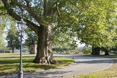自然令人激动的看法在城市公园 免版税库存照片