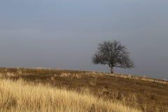 自然传奇在秋天以后:不生叶的孤立树  免版税库存图片