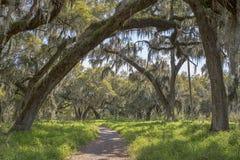 自然供徒步旅行的小道 库存图片