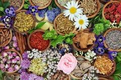 自然供选择的草药 库存图片