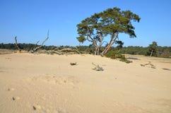 自然保护De Hoge Veluwe 库存照片