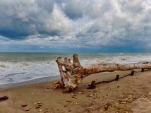自然保护Sentina -圣Benedetto del Tronto 免版税库存照片