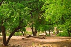 自然做的一个绿色和黄色庭院 库存图片
