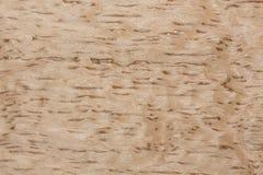 自然光桦树您新的内部的表面饰板纹理 免版税库存照片