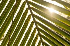自然光通过叶子 免版税库存照片