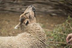 自然公园动物园 免版税库存图片