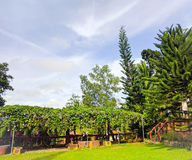 自然公园和蓝天 免版税库存图片