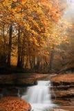 自然公园流 免版税图库摄影