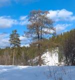 自然公园鹿小河 库存图片