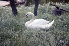 自然公园 免版税库存照片