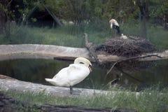 自然公园 免版税图库摄影