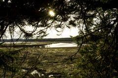 自然公园 库存图片