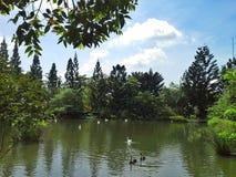 自然公园 库存照片