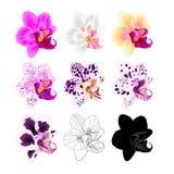 自然兰花兰花植物各种各样的颜色,概述,剪影,在一白色背景葡萄酒传染媒介编辑可能的illust的花第五 库存图片