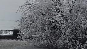 自然冬天发型 免版税图库摄影