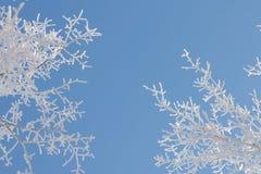 自然冬天背景 免版税图库摄影