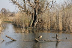 自然冬天-河,水坝 免版税库存照片