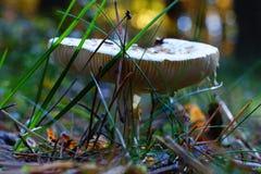 自然创造秀丽领域蘑菇秋天 免版税库存照片