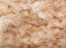自然动物毛皮纹理 免版税图库摄影