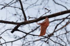 自然助长与春天的第一个标志的新的生活 库存照片