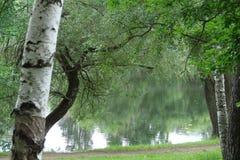 自然区域  免版税库存图片