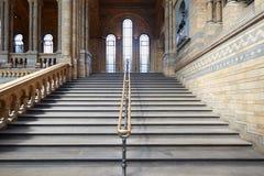 自然历史与古老楼梯的博物馆内部在伦敦 库存图片