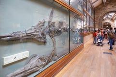 自然历史与鱼龙的博物馆内部在伦敦 图库摄影