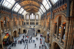 自然历史博物馆内部看法  免版税库存图片
