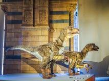 自然历史博物馆在伦敦, hdr 库存图片