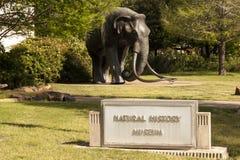 自然历史博物馆在达拉斯,得克萨斯 免版税库存图片