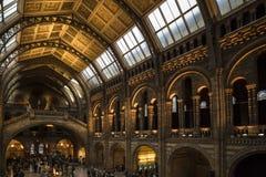 自然历史博物馆散开的光的伦敦组合从天花板窗口和内部光的 库存照片